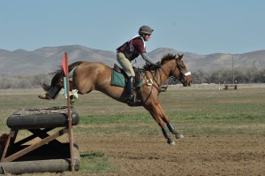 horse on XC